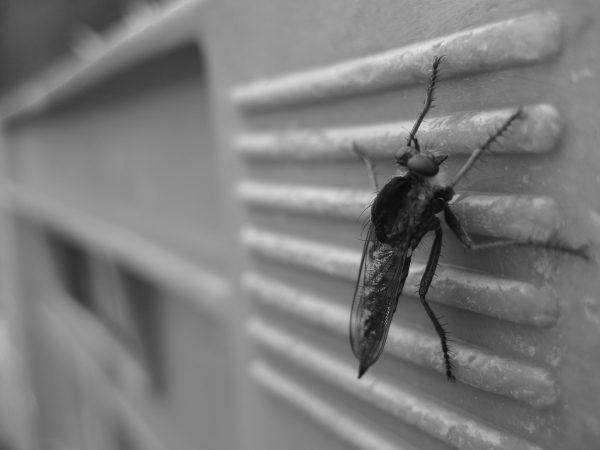 mosquito-450394_1920